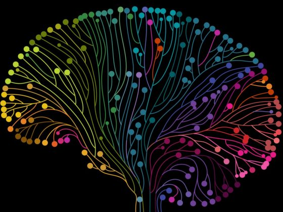 brain-1508781425